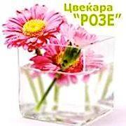 Цвеќара Розе – Веро 2